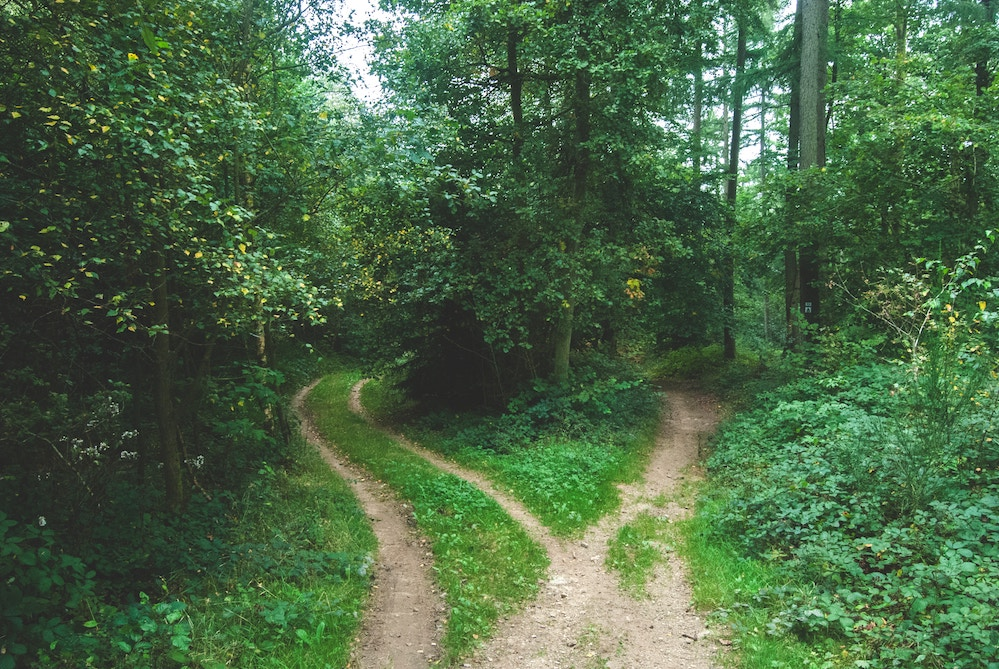 IWSG: Which path?