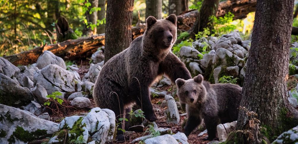 IWSG: Goldilocks and The Two Bears